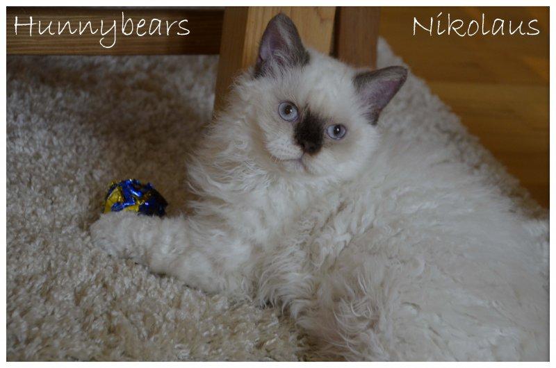 Nikolaus_DSC0066