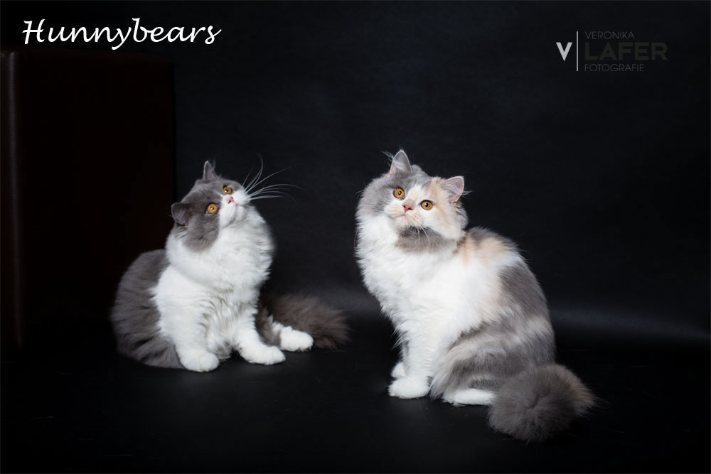 Hunnybears What Is Love