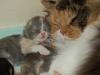 Tinkerbelle und Furry