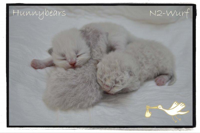 Hunnybears N2-Wurf