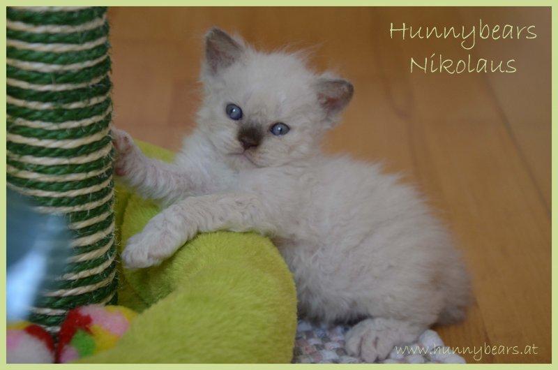 Hunnybears Nikolaus